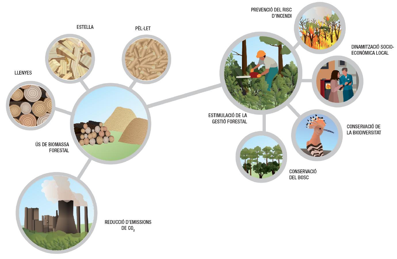 Proteguim els nostres boscos amb la gestio forestal tota Biomassa llenyes, estella, pel.let i amb ajuts i subvencions per la Biomassa en les nostres vivendes i en la industria.